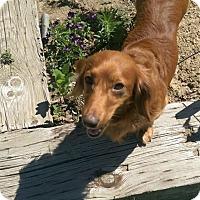 Adopt A Pet :: Rugger - Louisville, CO
