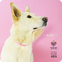 Adopt A Pet :: Holly - Tomball, TX