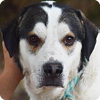 Adopt A Pet :: Webster - Huntley, IL
