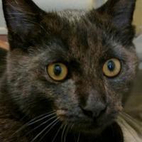 Adopt A Pet :: Granite - Memphis, TN