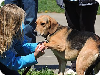 Hound (Unknown Type) Mix Dog for adoption in Hillsville, Virginia - Candy