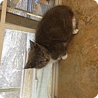 Adopt A Pet :: Whiskers - Aiken, SC