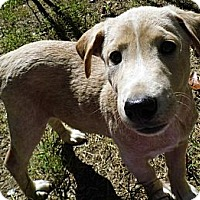 Adopt A Pet :: Garret-Low Adoption $100 - Jarrettsville, MD