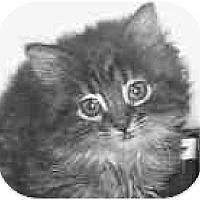 Adopt A Pet :: Mitzie - Dallas, TX