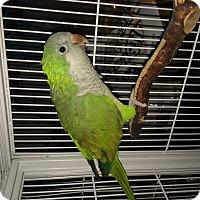 Adopt A Pet :: Tuck - Punta Gorda, FL