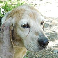 Adopt A Pet :: OCTORARO - Millerstown, PA
