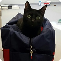 Adopt A Pet :: Pierre - Lafayette, NJ