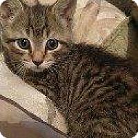 Adopt A Pet :: GREEN - Hampton, VA