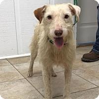 Adopt A Pet :: 6914 - Calhoun, GA