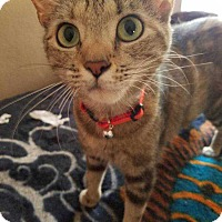 Adopt A Pet :: Tiger Lilly - South Bend, IN