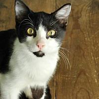 Adopt A Pet :: Riddler - San Antonio, TX