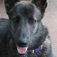 Adopt A Pet :: Daizy - Nashua, NH