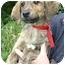 Photo 3 - Hound (Unknown Type)/Sheltie, Shetland Sheepdog Mix Puppy for adoption in Ladysmith, Wisconsin - Milo