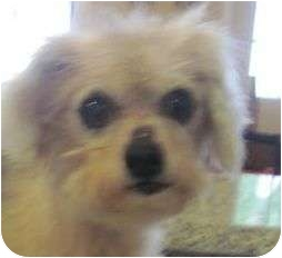 Cairn Terrier/Terrier (Unknown Type, Small) Mix Dog for adoption in Staunton, Virginia - Jimmy