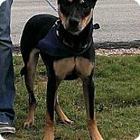 Adopt A Pet :: Chloe - Spring Branch, TX