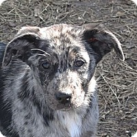 Adopt A Pet :: Lainey - PENDING - kennebunkport, ME