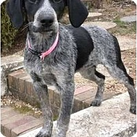 Adopt A Pet :: Stormy - Fulton, MD
