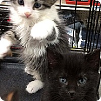 Adopt A Pet :: Otis - Harrisburg, NC