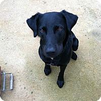 Adopt A Pet :: Banjo - Marietta, GA