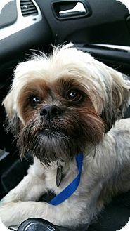 Lhasa Apso Mix Dog for adoption in Urbana, Ohio - Kermit
