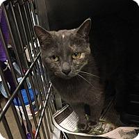 Adopt A Pet :: Splash - Killian, LA
