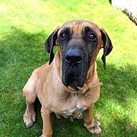 Adopt A Pet :: Rhett - Pittsburgh, PA