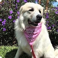 Adopt A Pet :: Pandia - Kyle, TX