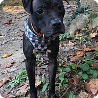 Adopt A Pet :: JEMMA - East Stroudsburg, PA