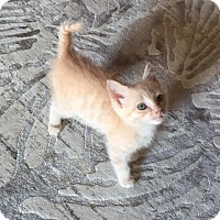 Adopt A Pet :: Peach - Herndon, VA