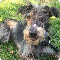Adopt A Pet :: *OWEN - Long Beach, CA