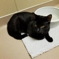 Adopt A Pet :: Aramis - Wisconsin Rapids, WI