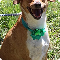 Adopt A Pet :: Lucy - Olympia, WA
