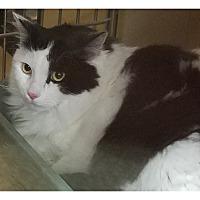 Adopt A Pet :: PHANTOM - Diamond Bar, CA