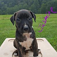 Adopt A Pet :: Jasmine - Burlington, VT