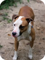 Terrier (Unknown Type, Medium) Mix Dog for adoption in Tinton Falls, New Jersey - Peaches
