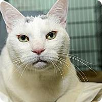 Adopt A Pet :: Rosie - New York, NY