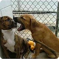 Adopt A Pet :: Hobbs - Winter Haven, FL