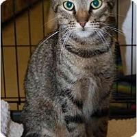 Adopt A Pet :: Cinderella - Jenkintown, PA