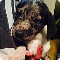 Adopt A Pet :: Annabelle - Ocala, FL