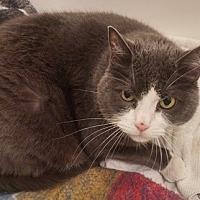 Adopt A Pet :: JayJay - North Highlands, CA