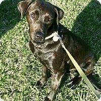 Adopt A Pet :: Mamma Bella - Houston, TX