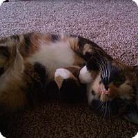 Adopt A Pet :: Belle - Morgantown, WV