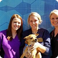 Adopt A Pet :: Mason - Cashiers, NC