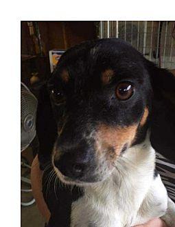 Beagle/Hound (Unknown Type) Mix Dog for adoption in Foristell, Missouri - Brittney