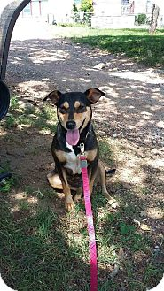 German Shepherd Dog/Terrier (Unknown Type, Medium) Mix Dog for adoption in Marble Falls, Texas - Buttercup