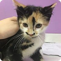 Adopt A Pet :: Carmello - Orleans, VT