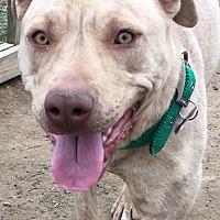 Adopt A Pet :: Betsy - Jasper, TN