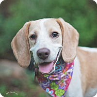 Adopt A Pet :: Lizzy - Kingwood, TX