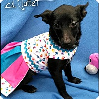 Adopt A Pet :: Muffet - Simi Valley, CA
