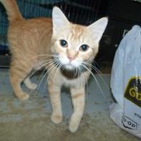 Adopt A Pet :: Cersei - Meadow Lake, SK